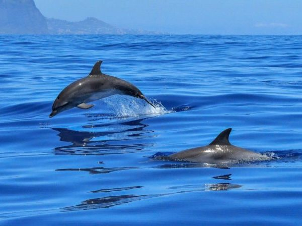 Dolphin & Snorkeling Tour